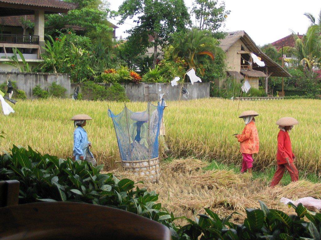 Bali by www.contentedtraveller.com
