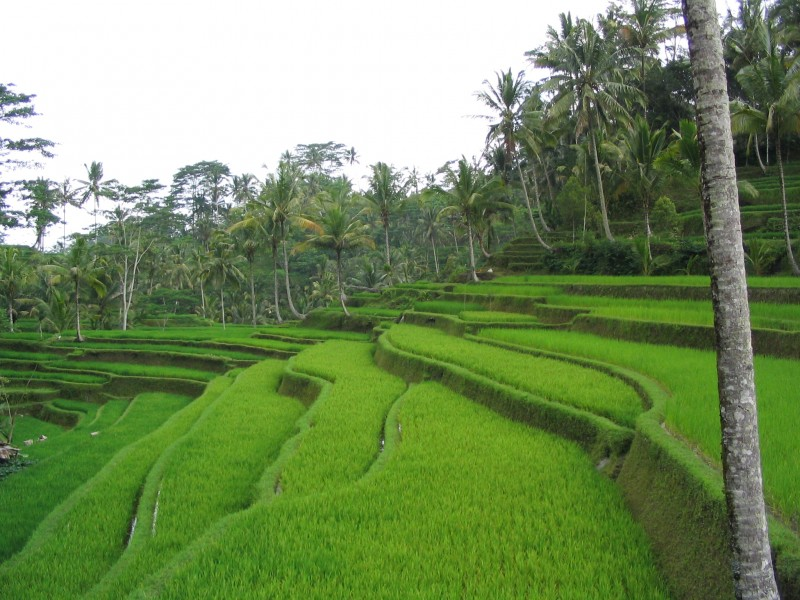 Bali 10 Things to do in this Tropical Paradise