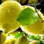 lemons-Sorrento-Italy