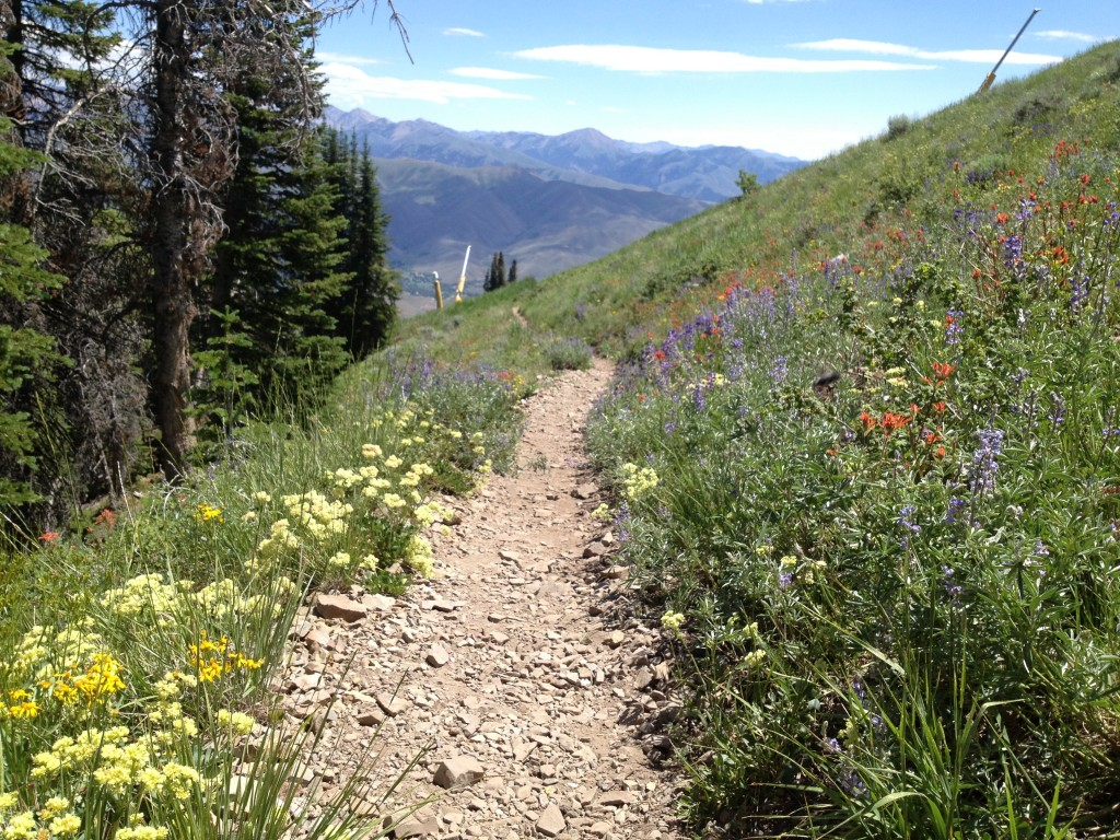 Hiking:  Follow one of the hundreds of hiking trails