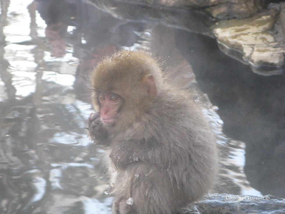 monkbaby