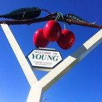 young cherry capital of australia