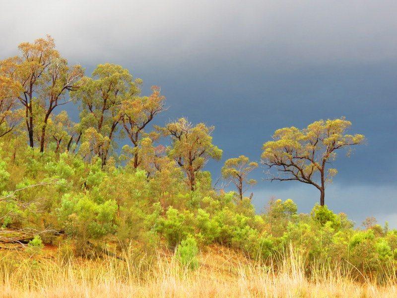 Canberra bush land