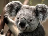 Understanding-Australia