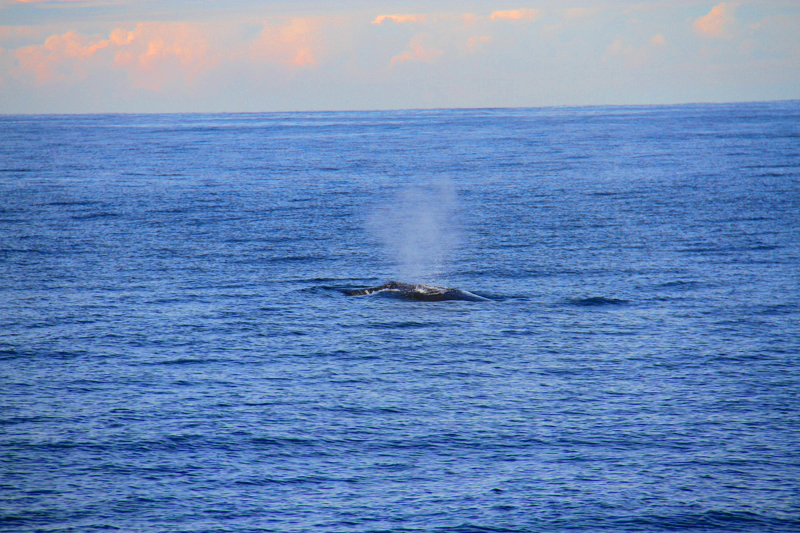 whale -watching-sydney