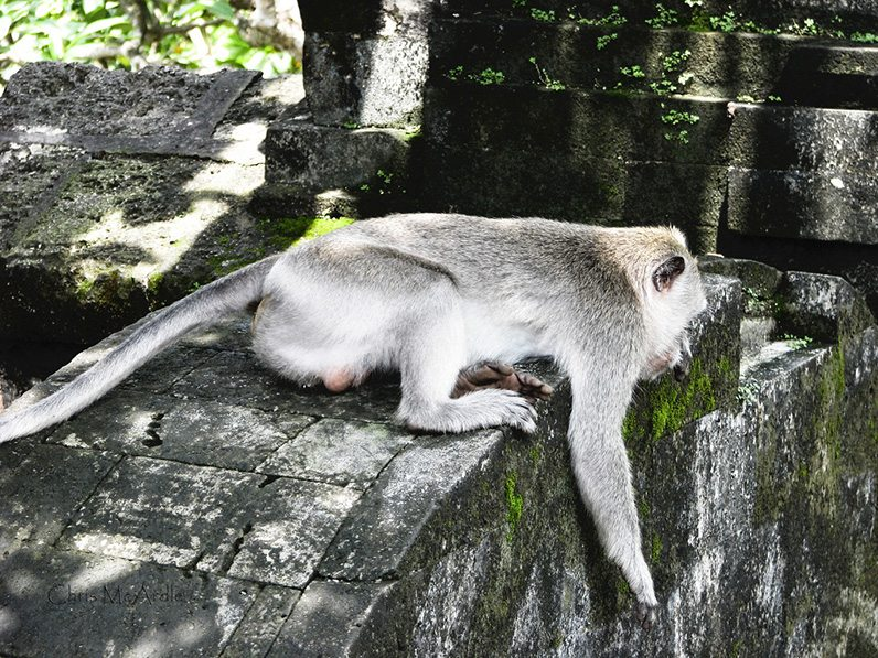 monkeys-at-uluwatu