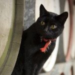 Silos Estate - Winery Cat