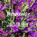 newcastle-austarlia