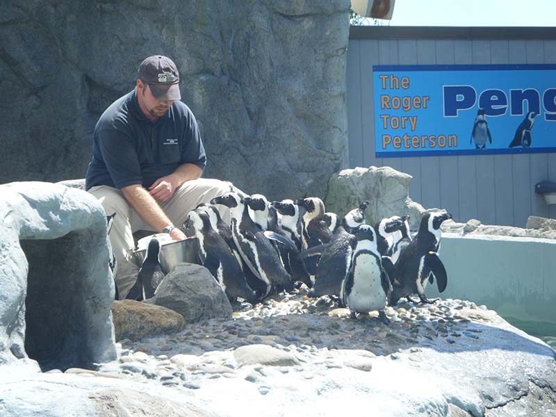 Mystic_Aquarium_Penguin_Feeding