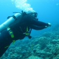 There are many things to do in this archipelago of islands, and diving in Vanuatu is a huge draw card for visitors