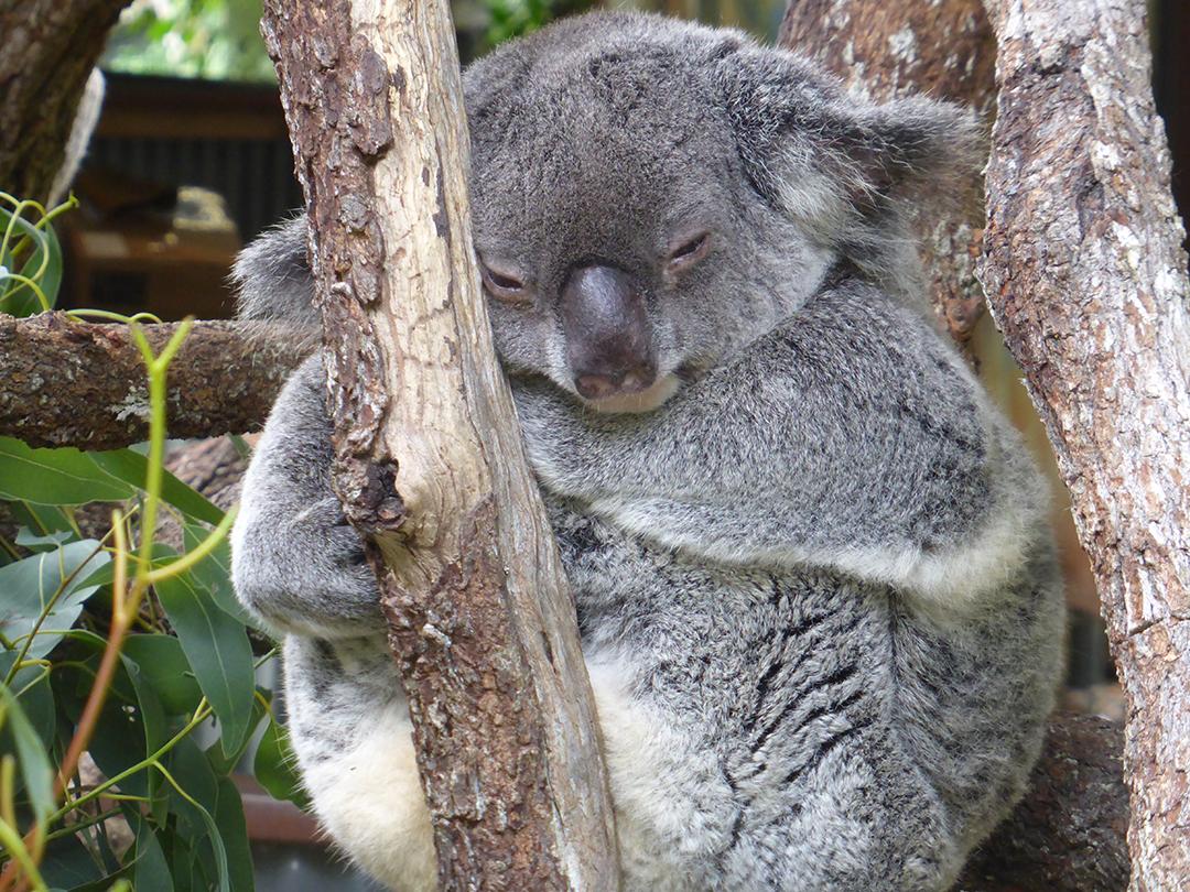 nanny-state-australia