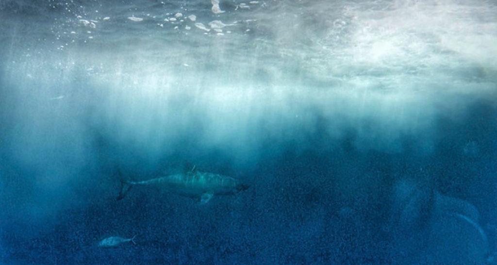 Best_Outdoor_Adventures_in_oceania