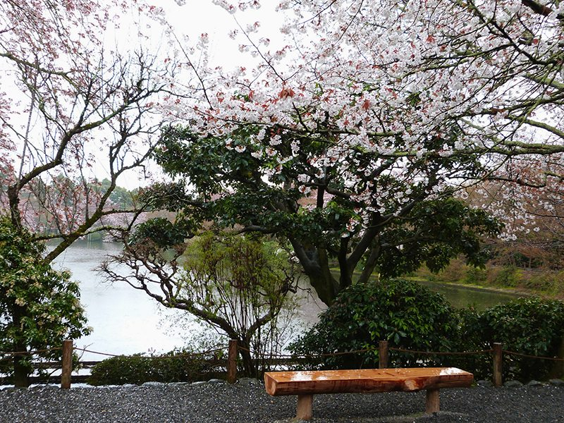 reasons-why-you-should-visit-the-city-of-Kyoto