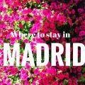 flowers from the city and Where to stay in MADRID