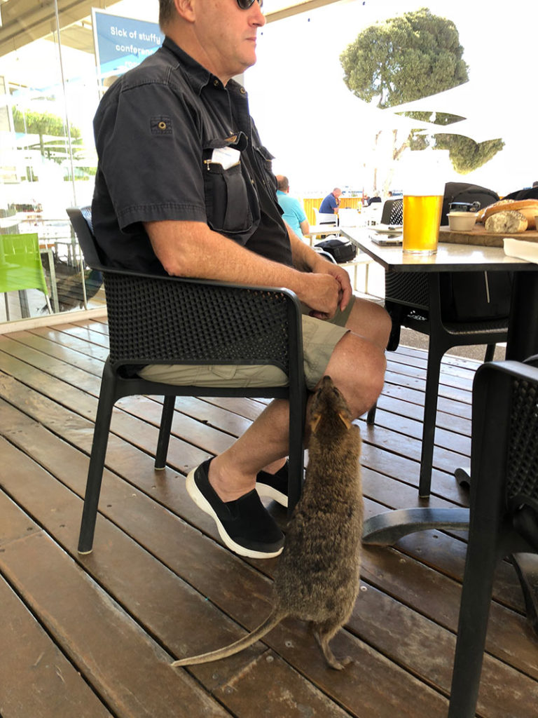 Visit Rottnest Island to see the quokka